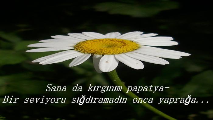 Yaprak İle İlgili Sözler