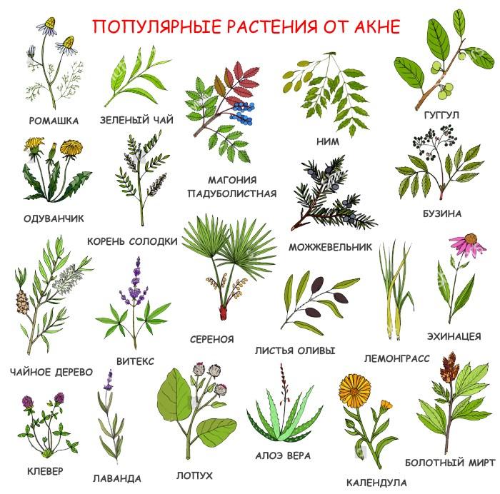 Лекарственные травы от акне и другие народные средства