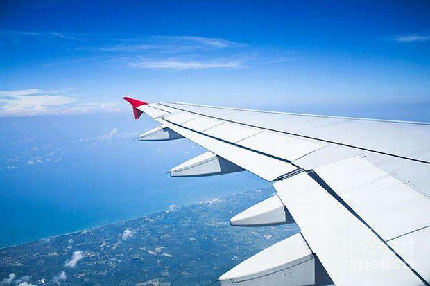 Companii aeriene - Aripa