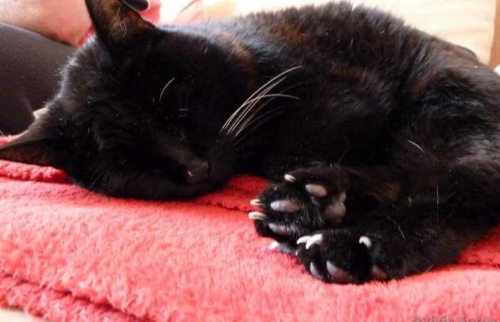Julia beim Nachmittagsschläfchen