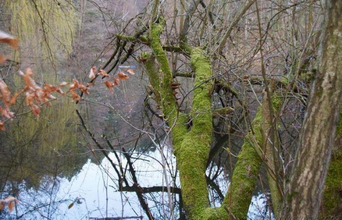 Umgefallener Baum am Hexenteich