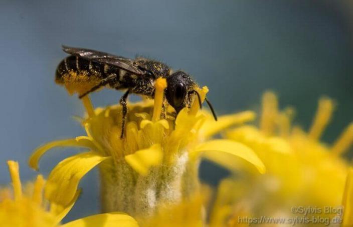 Insekt bei der Futtersuche