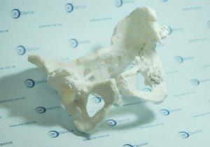 Анатомические 3D модели под 3D принтер