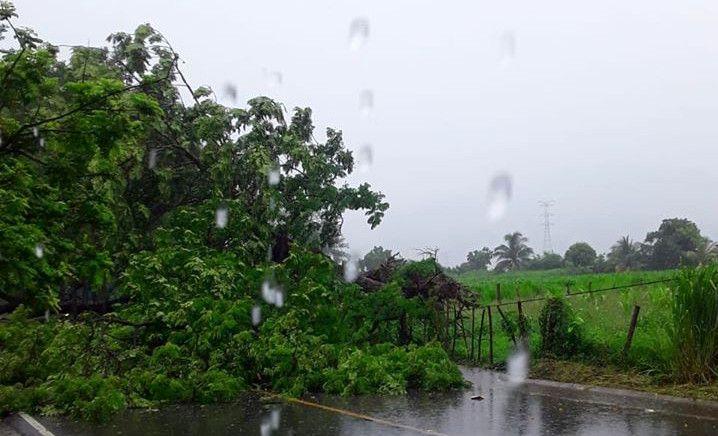 Amanda derriba árboles en Huité