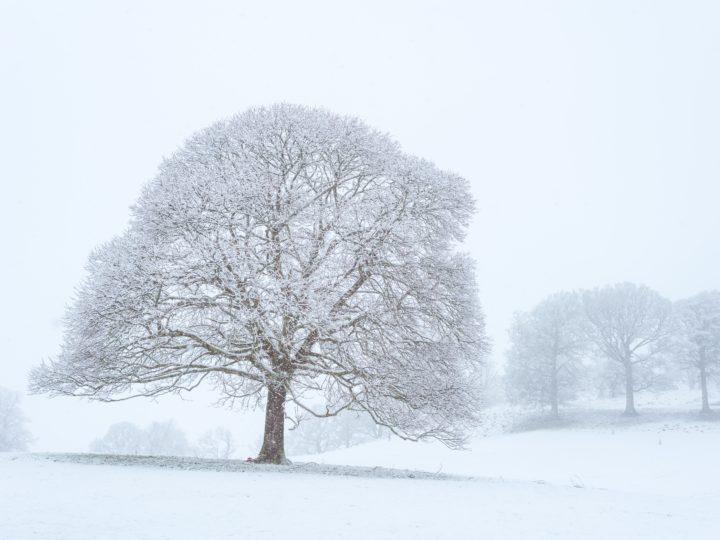 Les bienfaits de l'échinacée : la plante de l'hiver