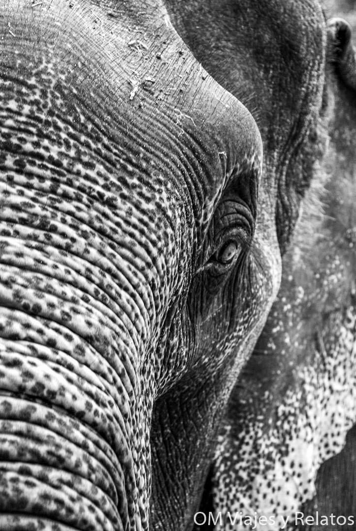 safari-elefantes-Tailandia
