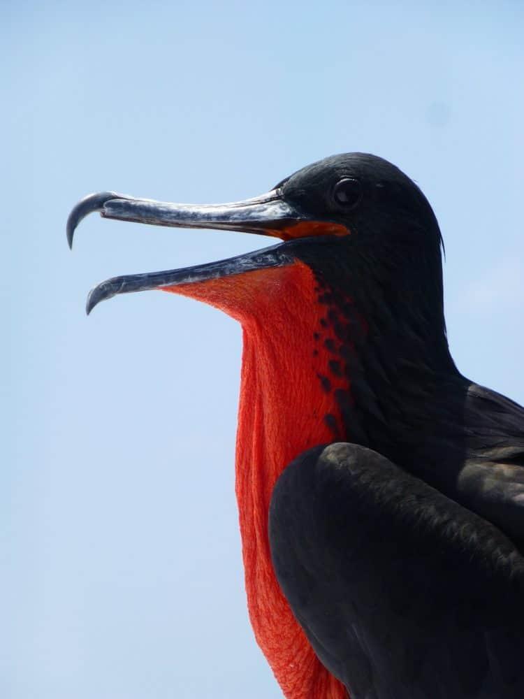 Frigate bird 891293 1920