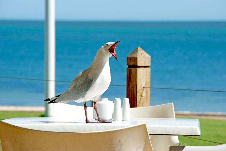 zabawna mewa siedzi na stoliku i głośno krzyczy