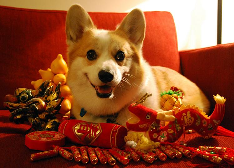 Как правильно встретить год собаки
