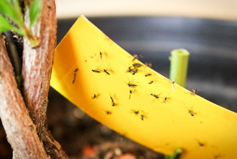 Come eliminare i moscerini in casa