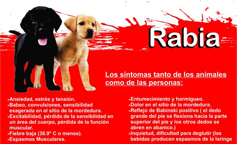 Exlicación básica de los sin síntomas de la rabia.
