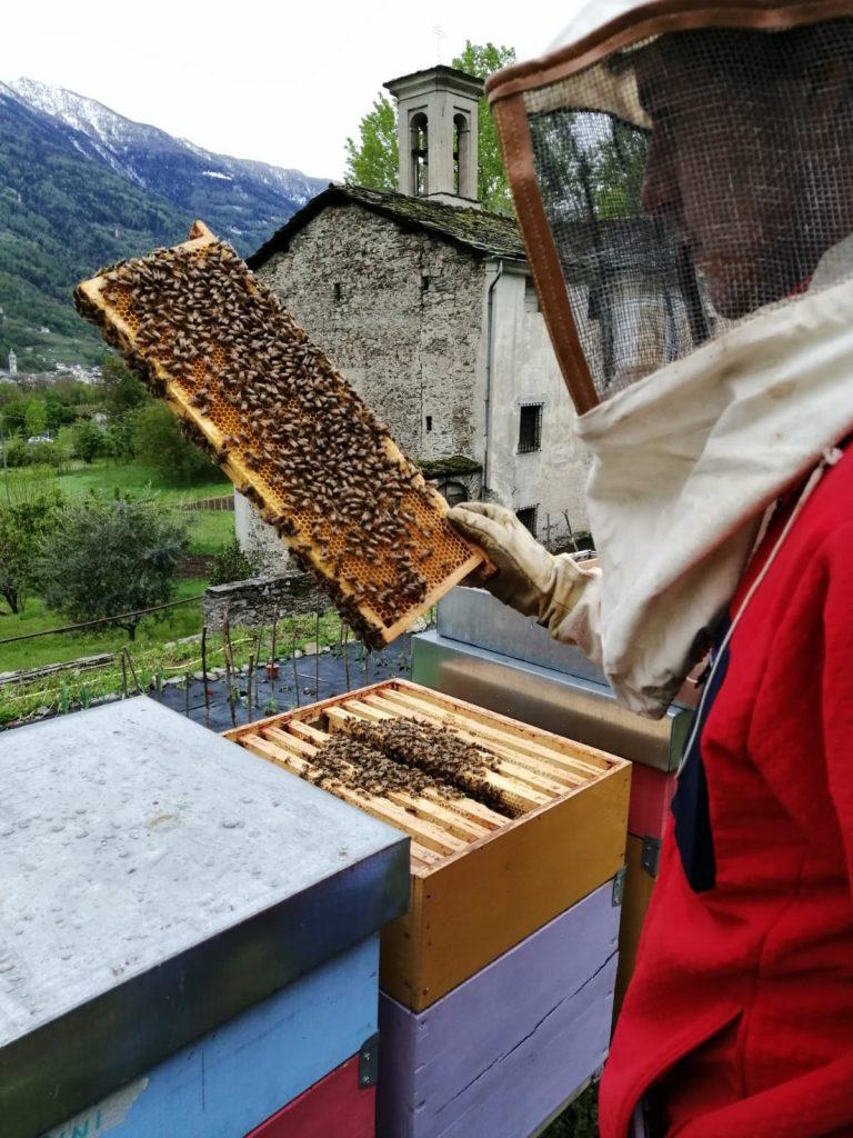 la-tua-prima-famiglia-di-api