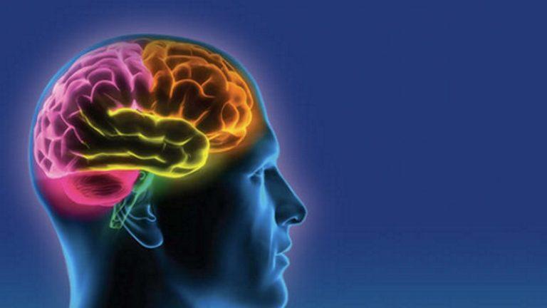 magnézium és az agy