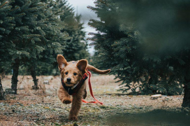 Hond rennend door het bos