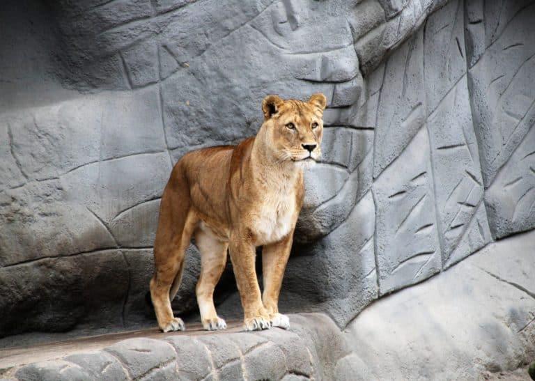 zivalski vrt zoo extraveganza