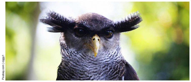 Есть ли у птиц уши