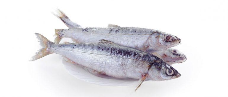 Нормы вылова в байкальском рыбохозяйственном бассейне