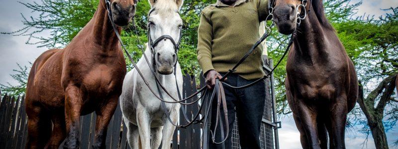 OlDonyo_horses