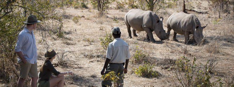thorntree rhino walk