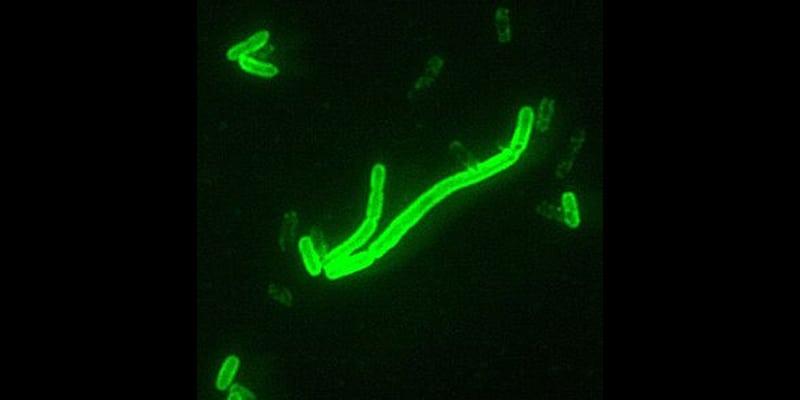 Plague patient identified in California