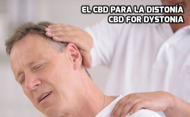 how CBD can help for dystonia