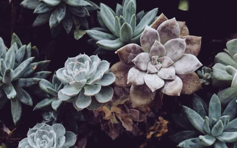How To Care for Your Succulents in Humid Weather