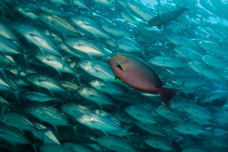 peces-buceo-mexico