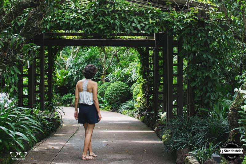 The Botanical garden in Singapore. Worth it a visit!
