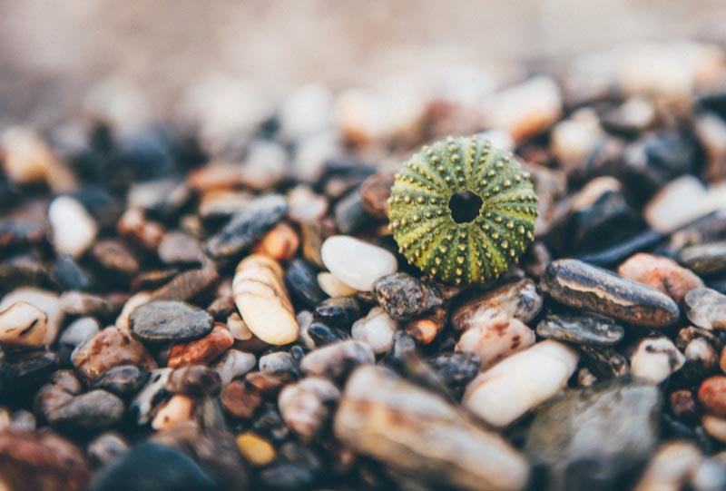 Beach Pebbles - Smooth Riverstone