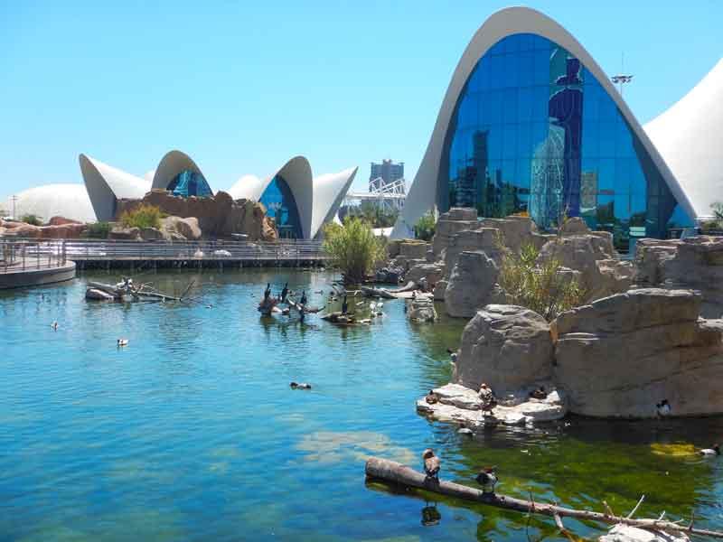 Cose da vedere a valencia in 3 giorni: l'Oceanografico