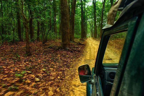 safari-tour-India