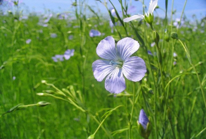 fleurlin