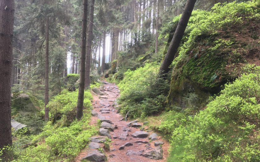 Trekking durchs Elbsandsteingebirge