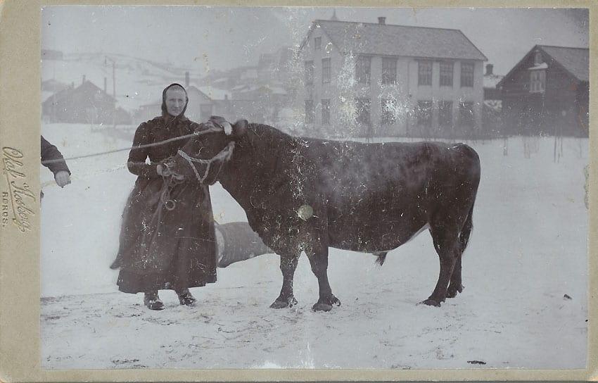 Kone og ku