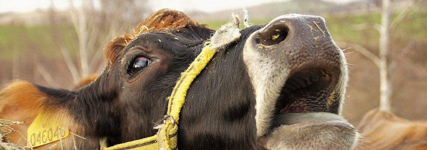 Mortalité excessive dans des élevages