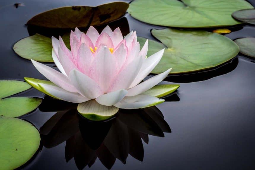 Akumal, Mexiko - Buddha Garden Spa