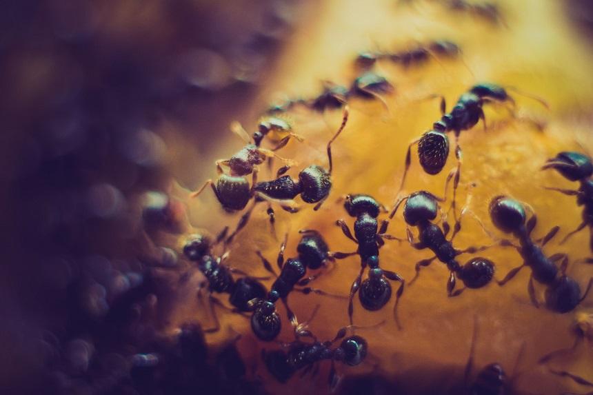 Ameisen in der Erde von Sukkulenten oder Kakteen.