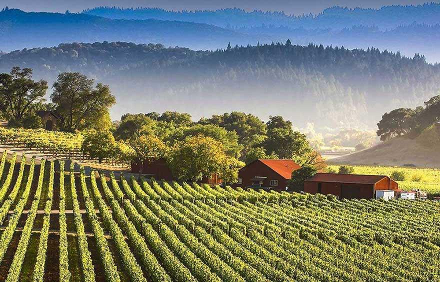vignoble Californie