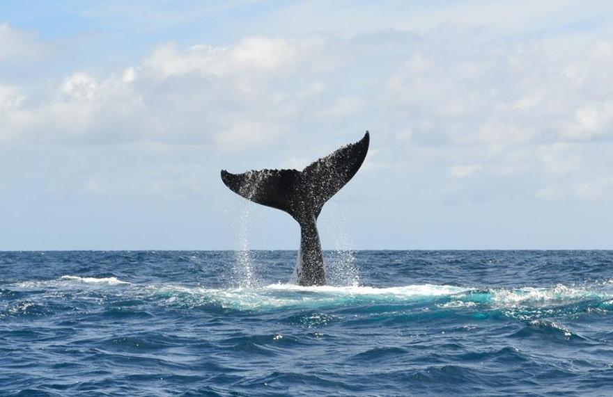 Baleine surpêche