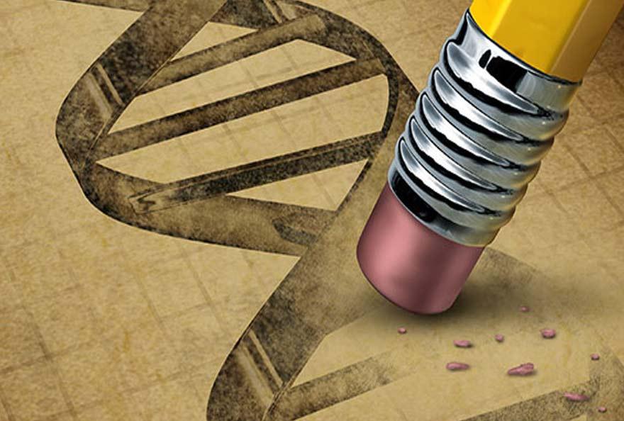 manipulation génétique