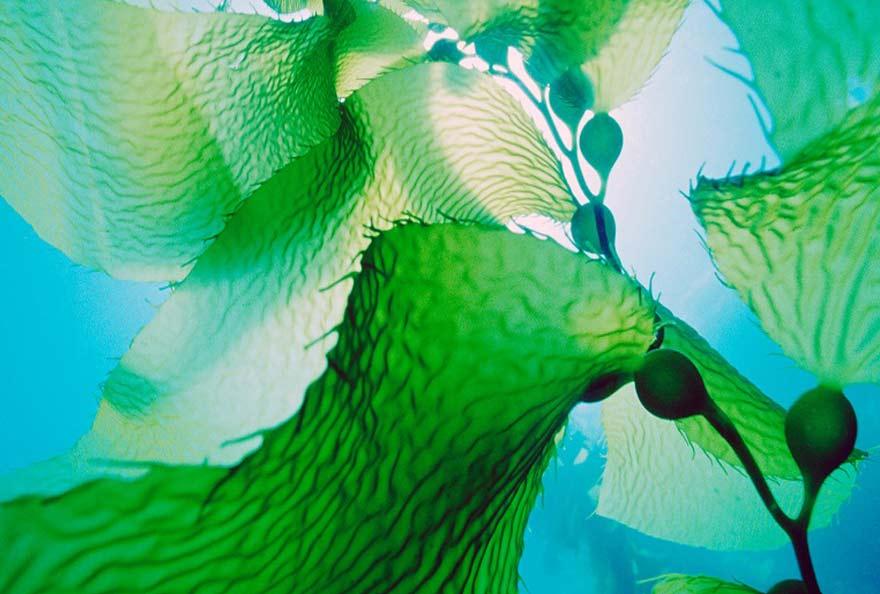 biotechnologies bleues