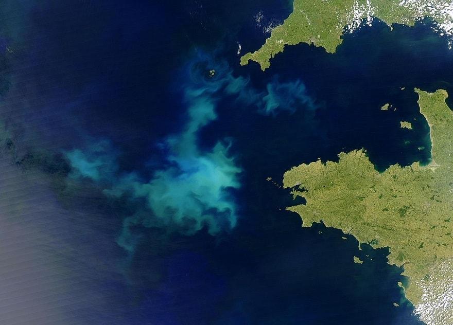 algues nuisibles