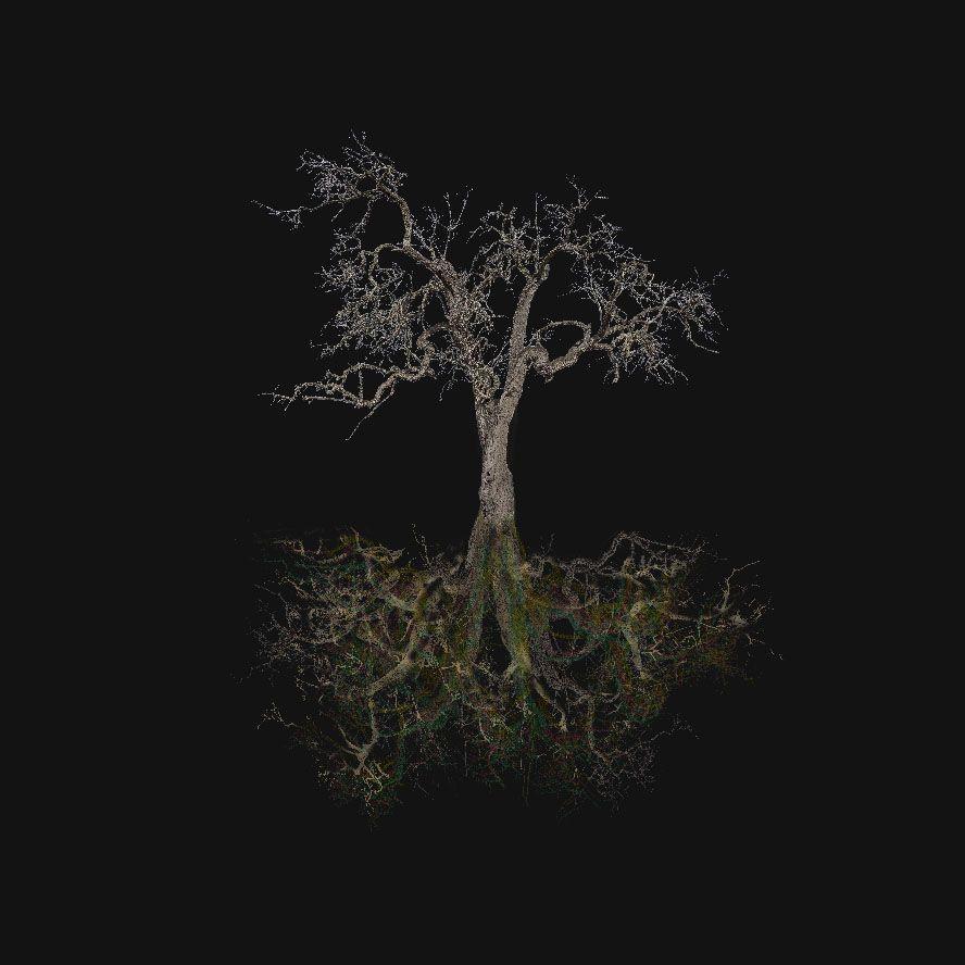 El árbol absoluto. Xisco Fuster fotógrafo