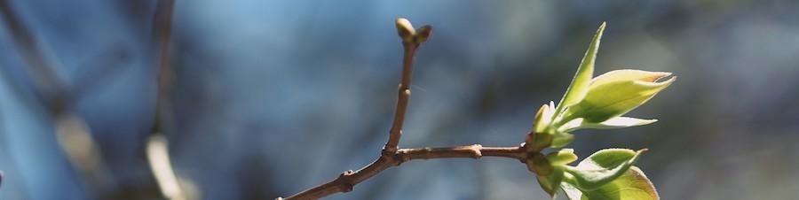 zelená větvička
