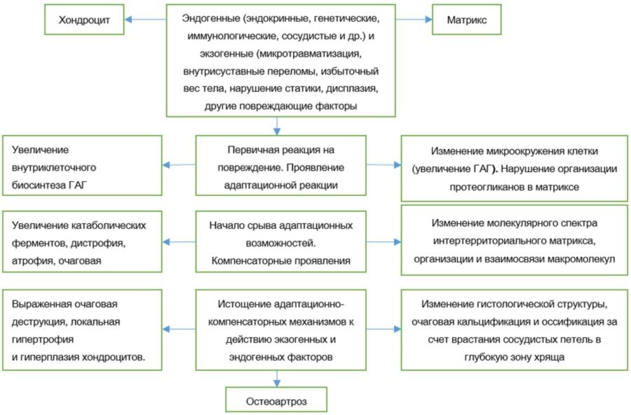 Концептуальная модель остеоартрозов, основанная на морфологических, в том числе гистохимических данных