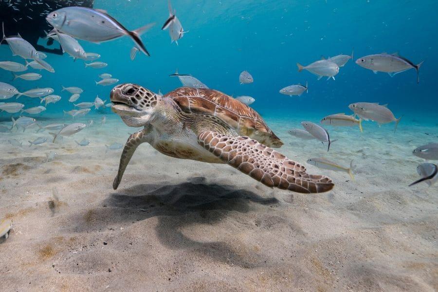 Snorkeling & Scuba Diving in Nassau