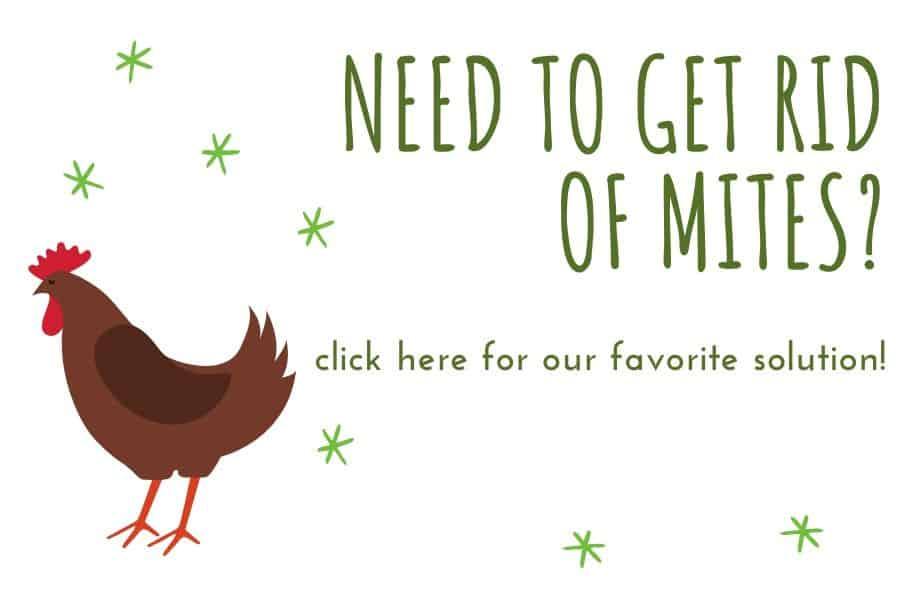 chicken mites