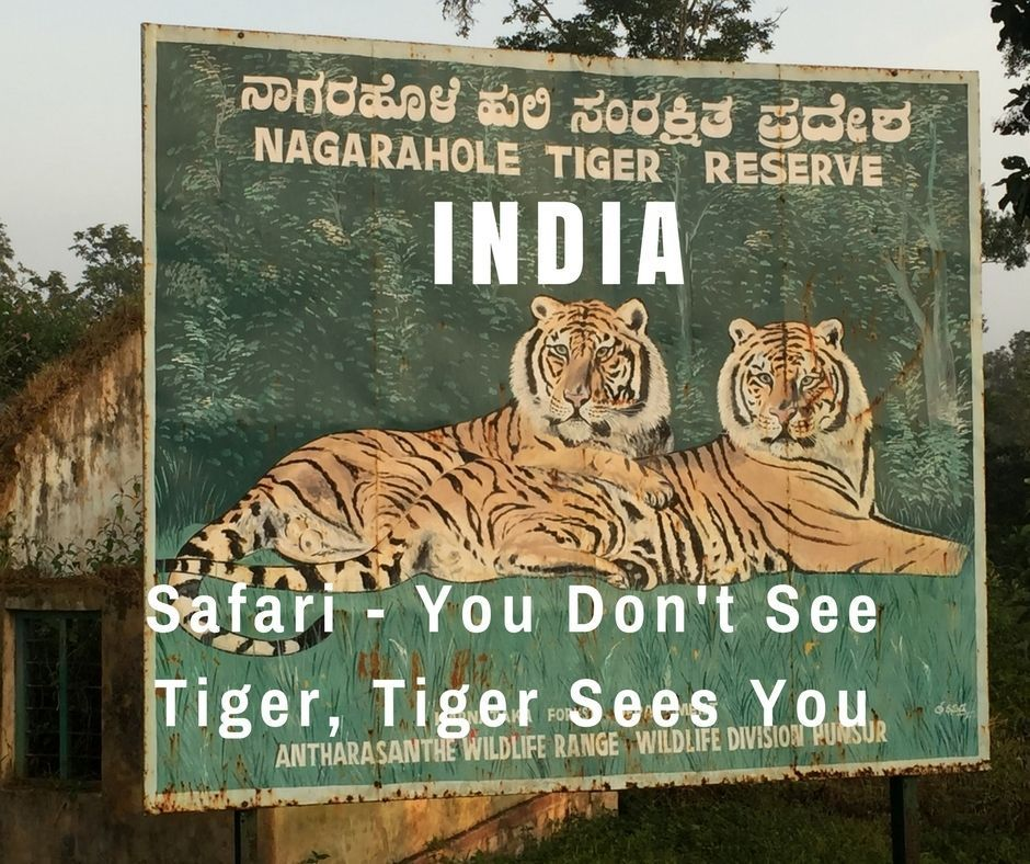 tigres-India