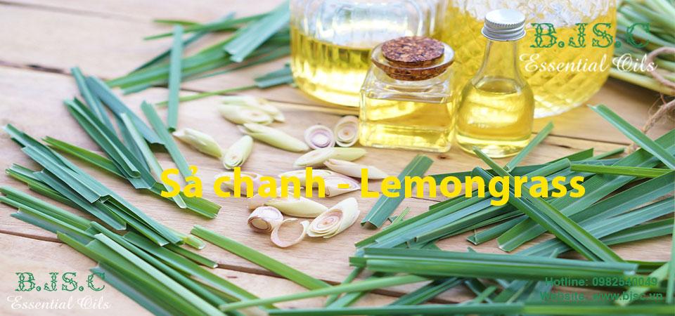 sả chanh 5 loại tinh dầu cho mùa hè nóng bức