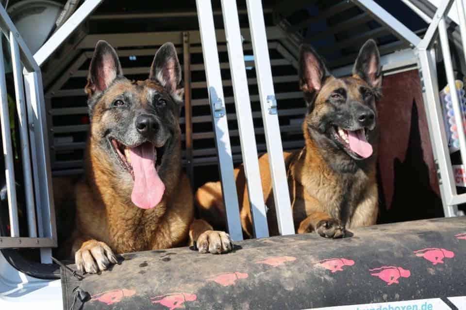 Des chiens qui sauvent des vies